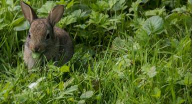 Maltrato animal : el conejo el gran olvidados de las estadisticas