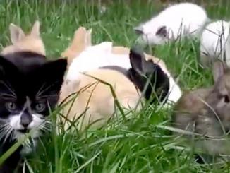 Videos virales de conejos