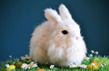 Cómo cuidar a los conejos domésticos