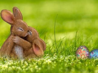 13 Datos curiosos sobre los conejos