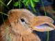 Siete ideas equivocadas sobre los conejos