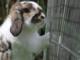 ¿Por qué un conejo no está hecho para vivir en una jaula?
