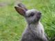 5 consejos para proteger a tu conejo del calor